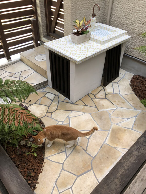 猫ニャンと暮らす庭